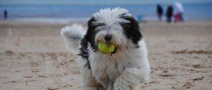 Fun dog walks near Whitby
