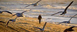 Whitby Seagulls