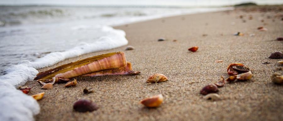 sea, sand a shells