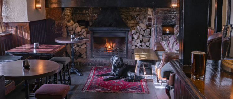 dog sitting by a fireplace in a pub