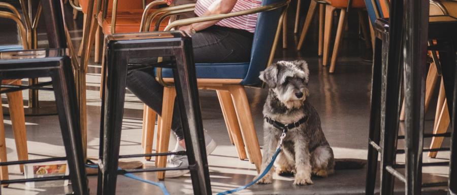 woman sitting in a dog friendly restaurant