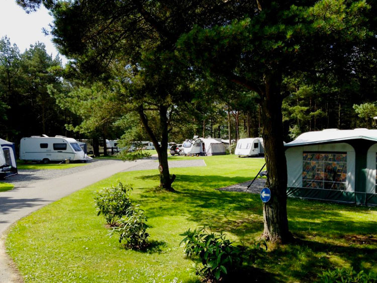 Touring caravans and motor homes at Ladycross Planation Caravan & Lodge Park